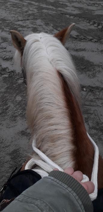 Eine kleine Trainingseinheit für Pferd und Reiter – so sind Prof. Krainz und ihre Farah wieder fit für längere Ausritte im Mai.