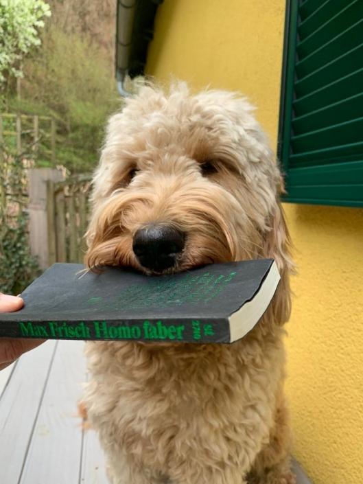 Frau Prof. Pawlik liest wieder einmal mehr und übt sich - mehr oder weniger erfolgreich - im Hundetraining.